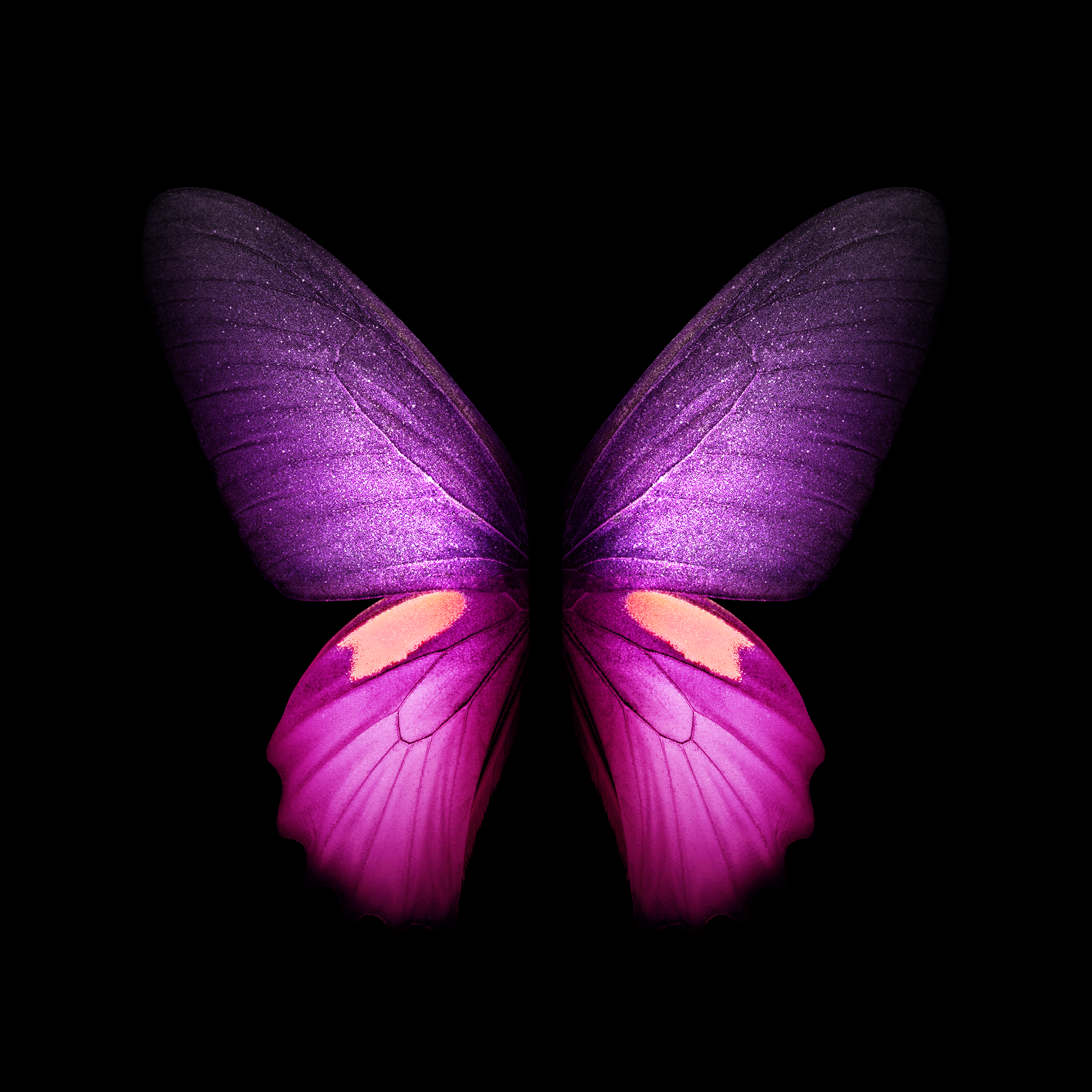 Butterfly Wallpaper Iphone X 2152x2152 Wallpaper Teahub Io