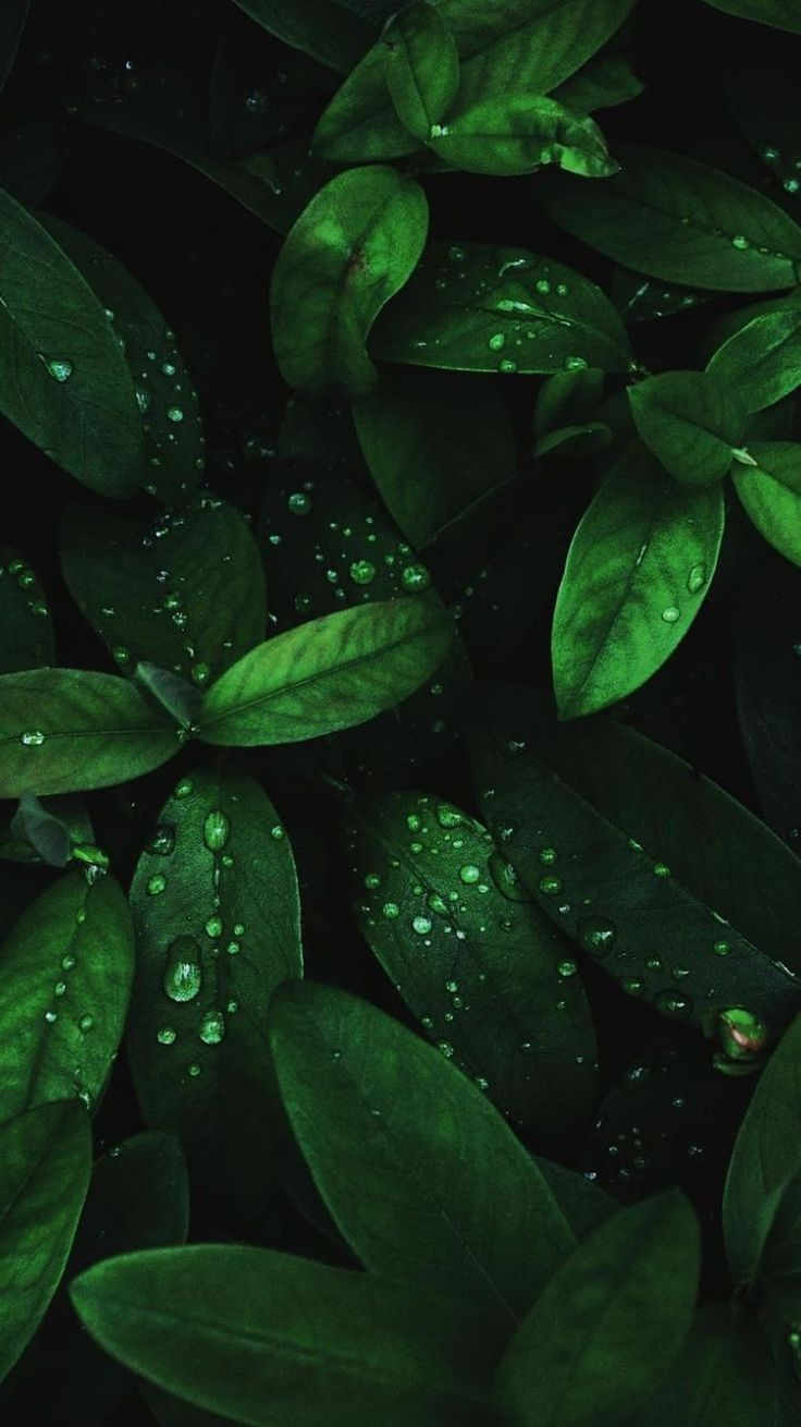 Awesome 4k Wallpaper Android Mobile wallpapers to download for free greenvirals