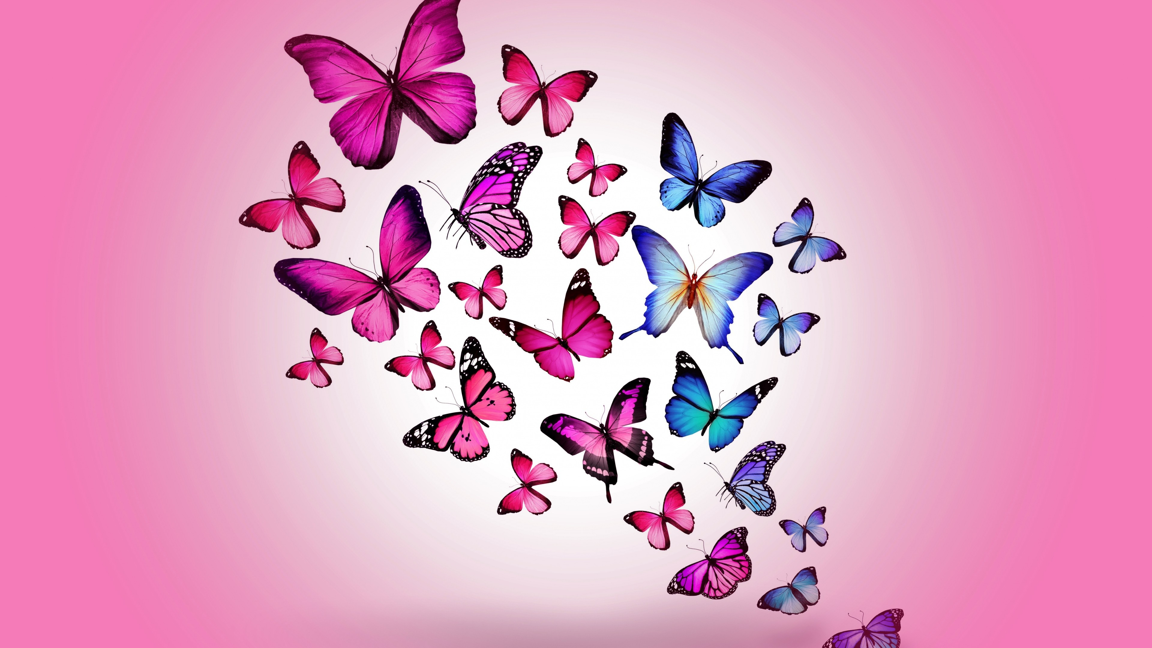 Butterfly Wallpaper Android   Src Amazing Butterfly - Desktop Butterfly Wallpaper Hd - HD Wallpaper