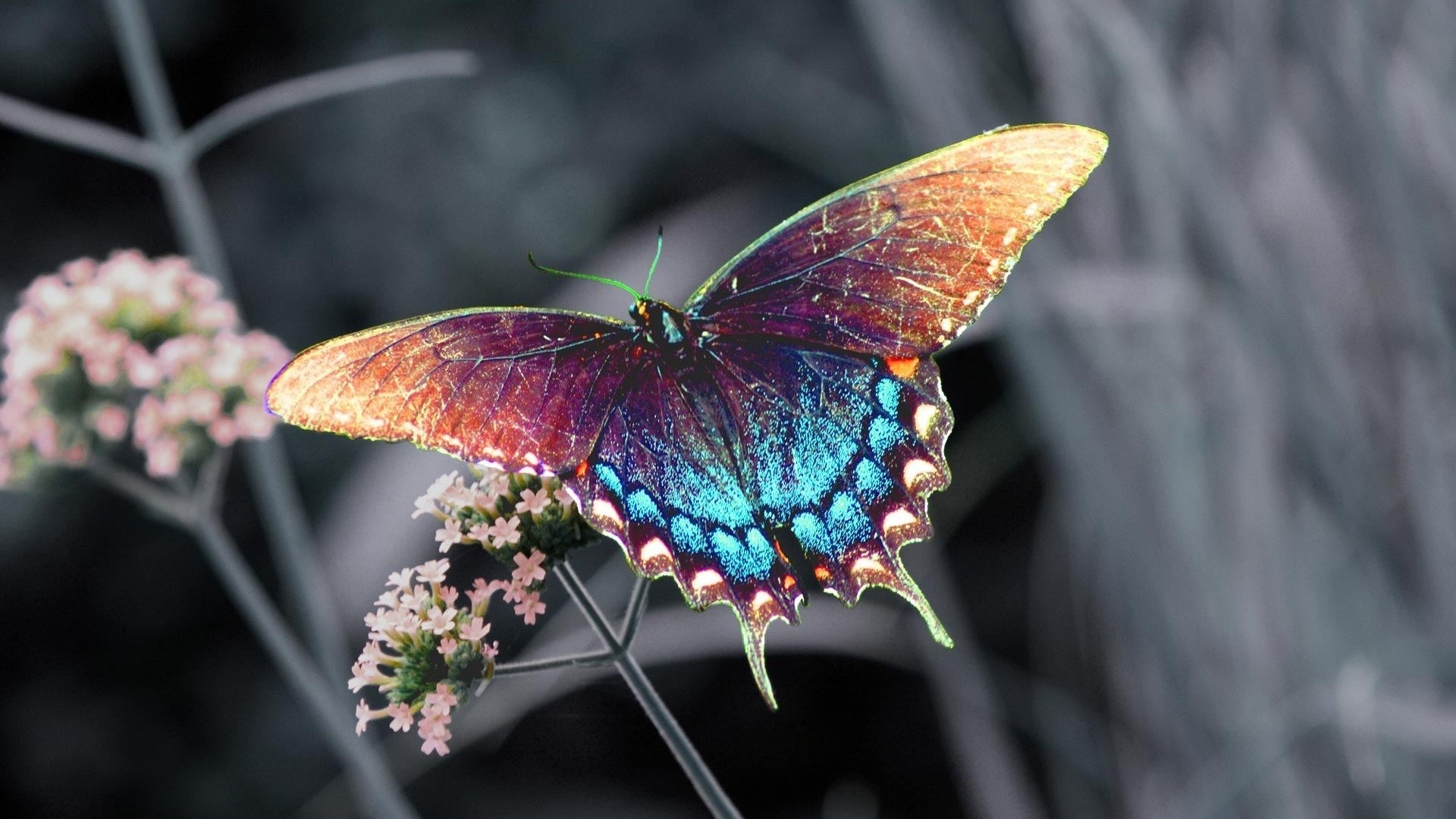 Butterfly Hd Wallpaper High Quality Resolution For Butterfly Hd Wallpapers 1080p 1920x1080 Wallpaper Teahub Io