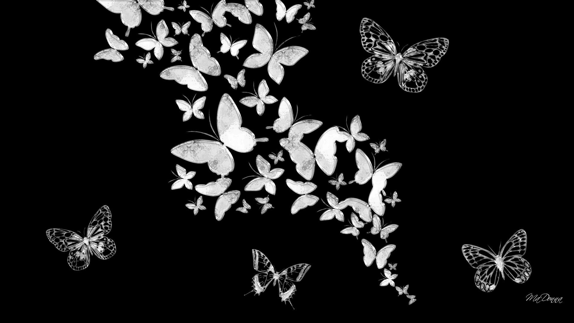 Download Wallpaper A Butterflies Black And White 1920x1080 Wallpaper Teahub Io