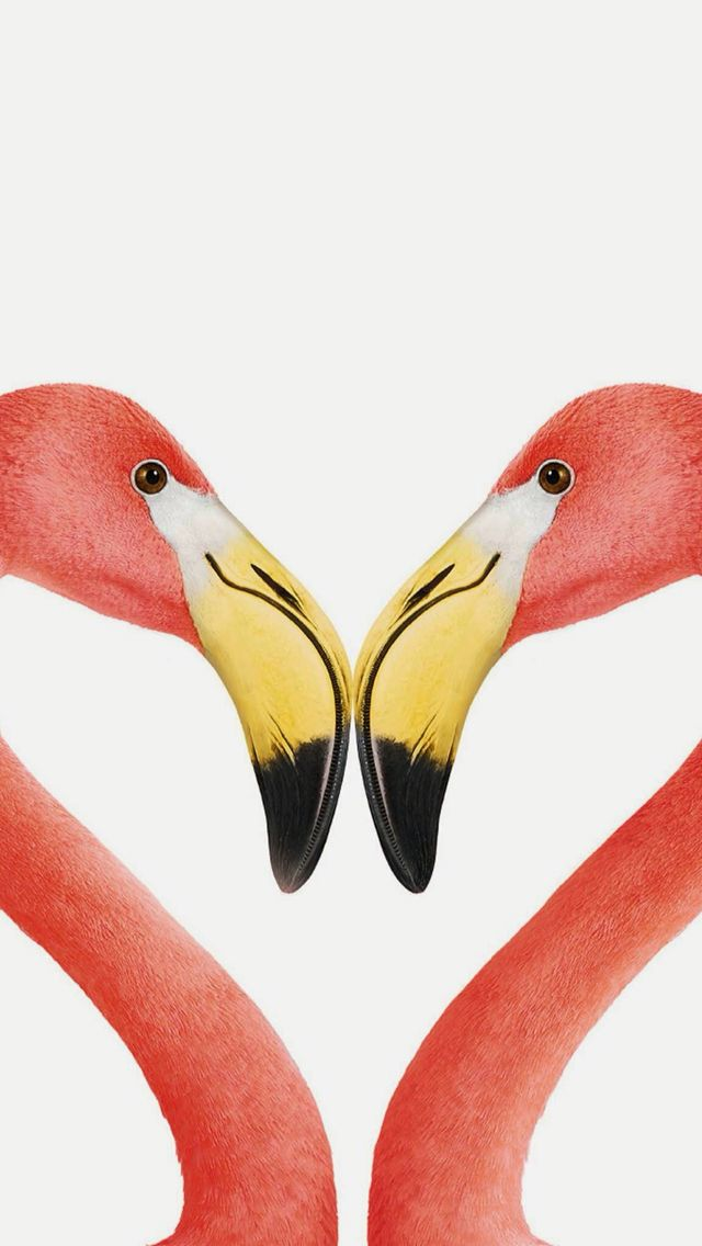Animals Wallpaper Iphone - Flamingos Forming A Heart - HD Wallpaper