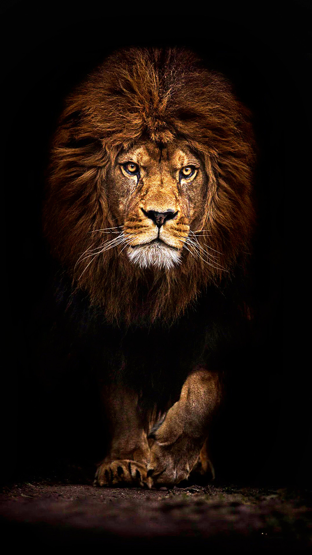 Cool Lion Wallpapers For Iphone - Ultra Hd 4k Wallpaper For Mobile - HD Wallpaper
