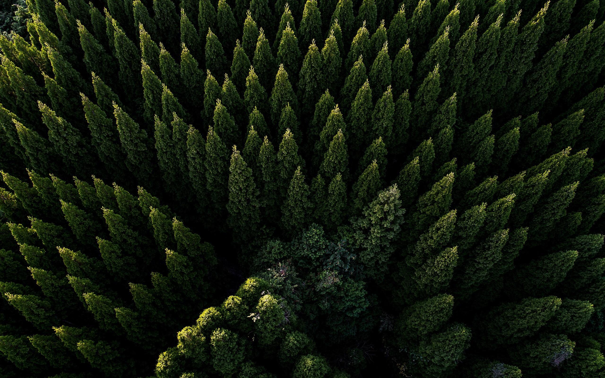 Iphone 11 Pro Wallpaper 4k Forest - HD Wallpaper