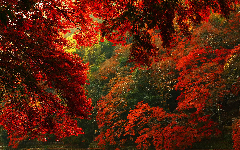 Red Forest Wallpaper Hd 2880x1800 Wallpaper Teahub Io