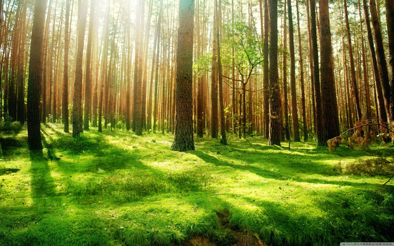 Beautiful Forest Scenery 4k Hd Desktop Wallpaper Forest Scenery 2880x1800 Wallpaper Teahub Io