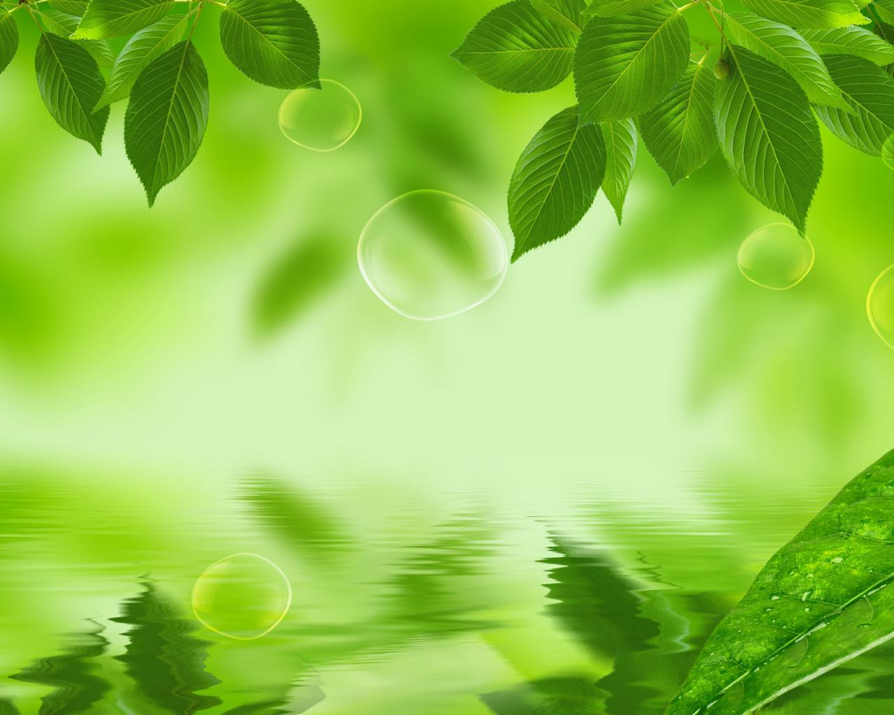 Nature Green Leaf Background - HD Wallpaper