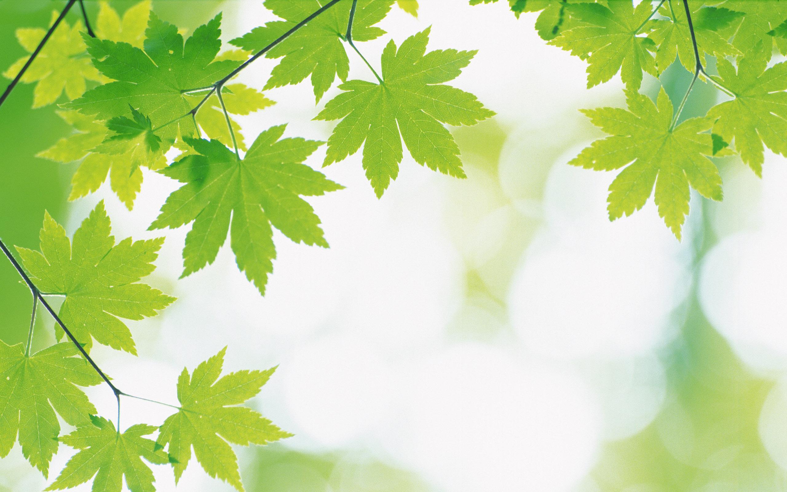 Green Nature Wallpaper - Nature Wallpaper Green - HD Wallpaper
