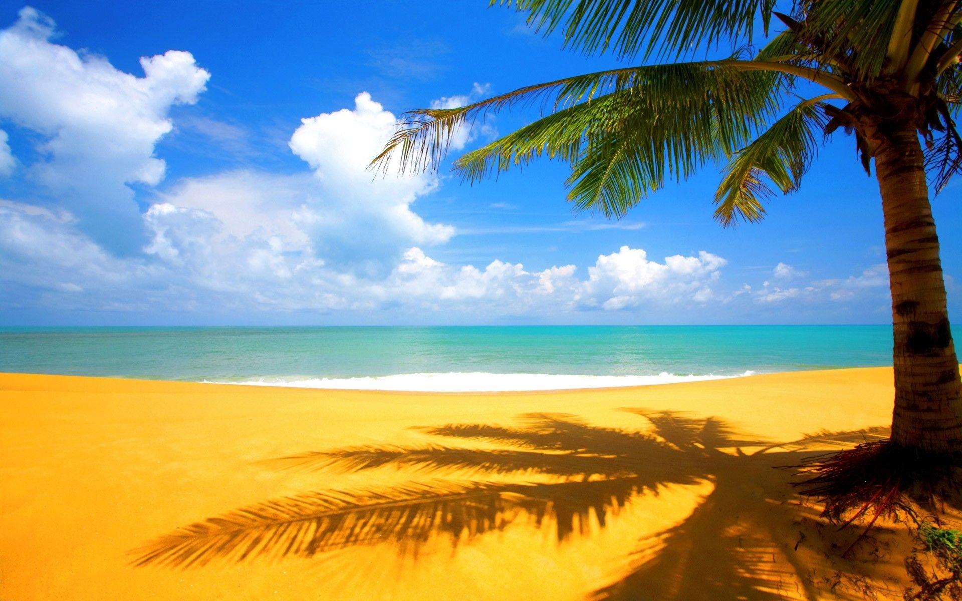 1920x1200, Hd Wallpaper Background, Beach Hd For Pc - Beach And Palm Trees Background - HD Wallpaper