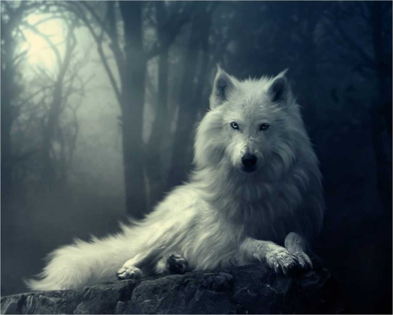 100% Quality Hd Wallpapers, Pictures - Love Best Wolf Quotes - HD Wallpaper