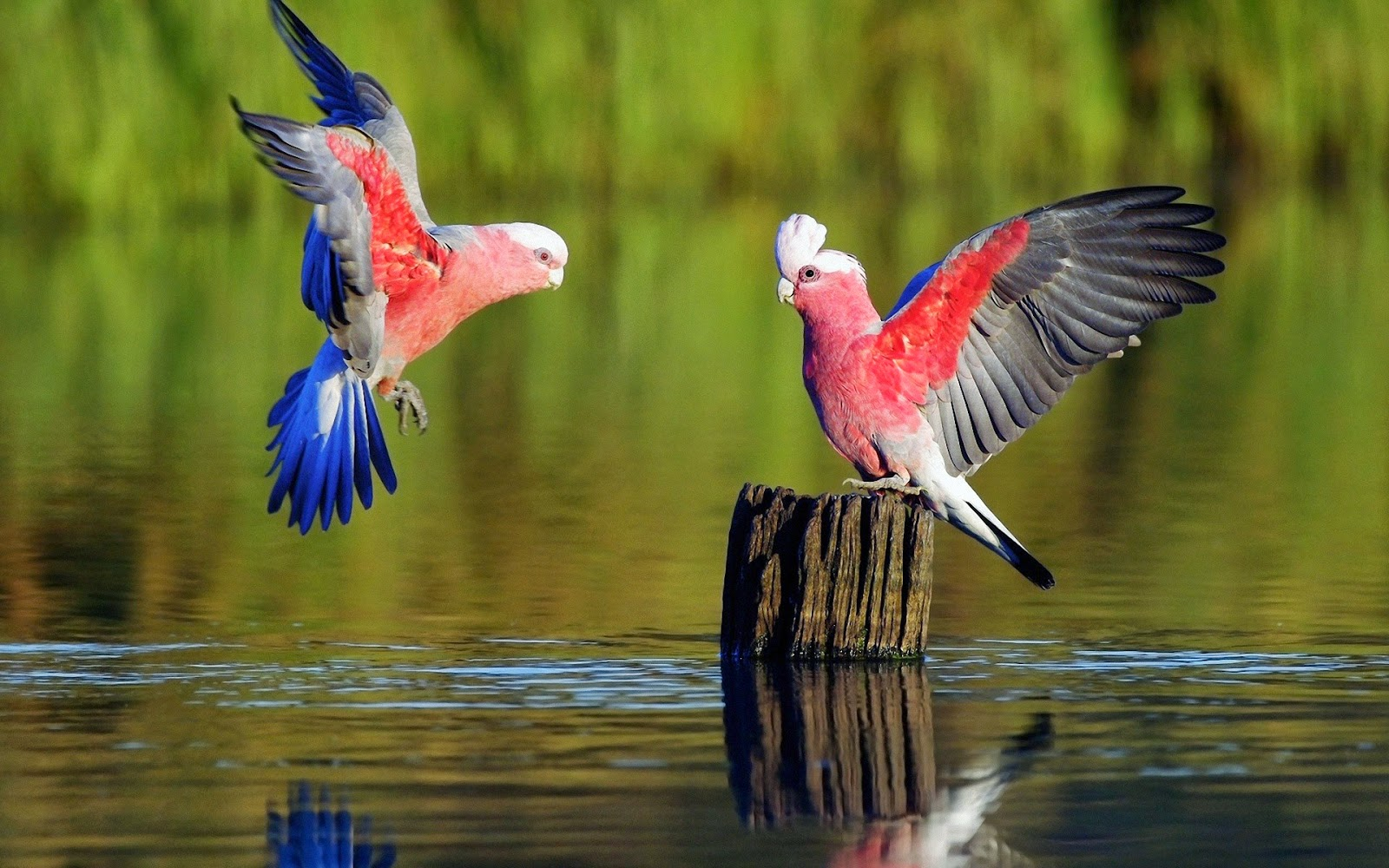 Best Most Amazing And Beautiful Birds In The World - Best Images In The World Hd - HD Wallpaper
