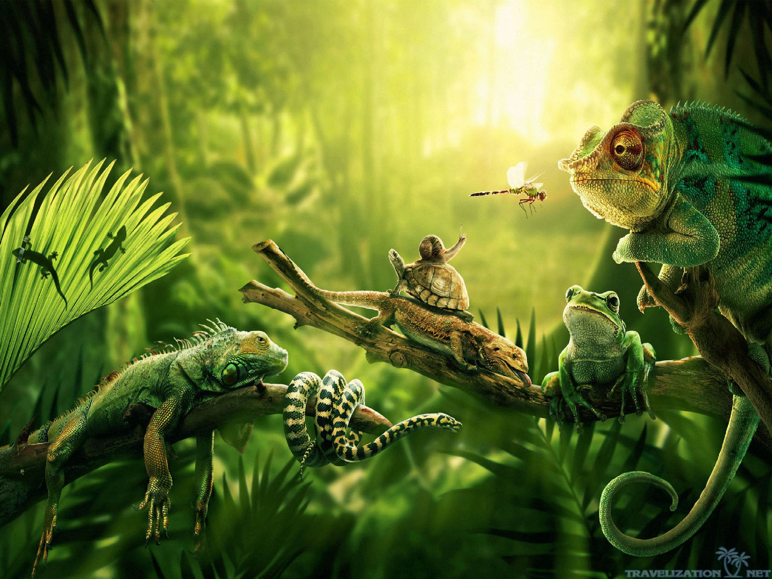 7 Kbytes V Jungle Animal Wallpaper 4k 2560x1920 Wallpaper Teahub Io