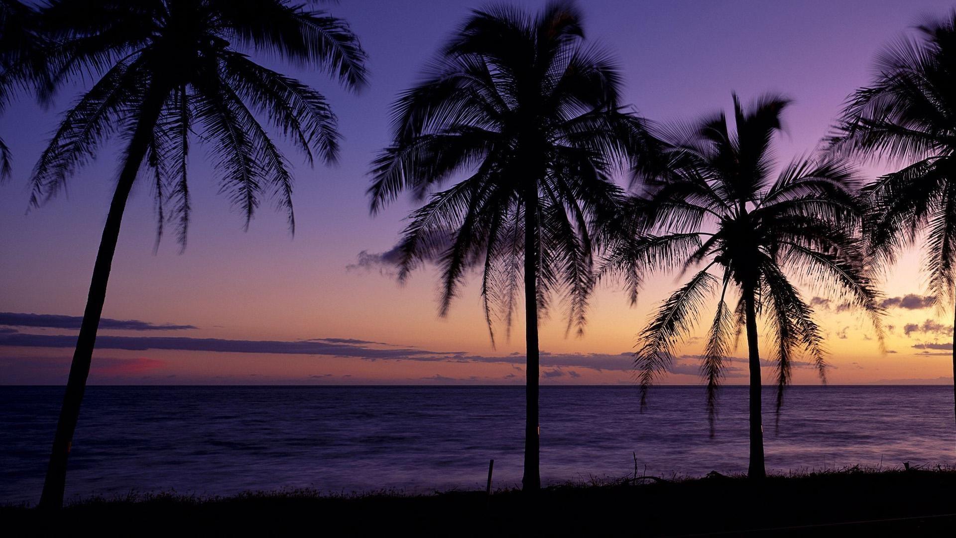Windows Panoramic Beach Theme Wallpaper - Twitter Header Palm Trees - HD Wallpaper