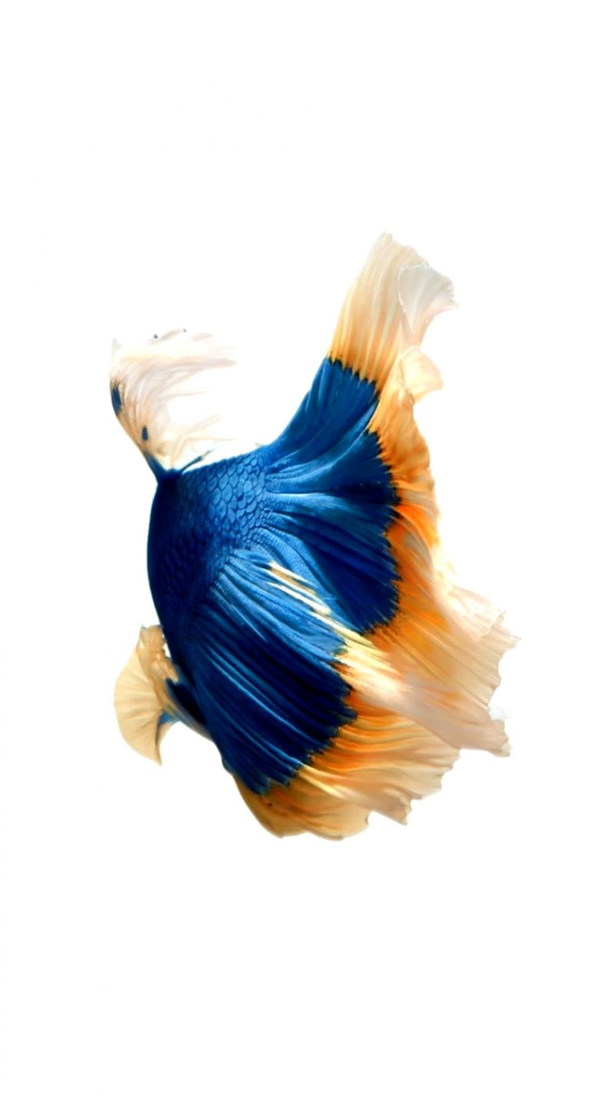 How To Get Apples Live Fish Wallpapers Back On Your Live Wallpaper Ios 10 880x1600 Wallpaper Teahub Io