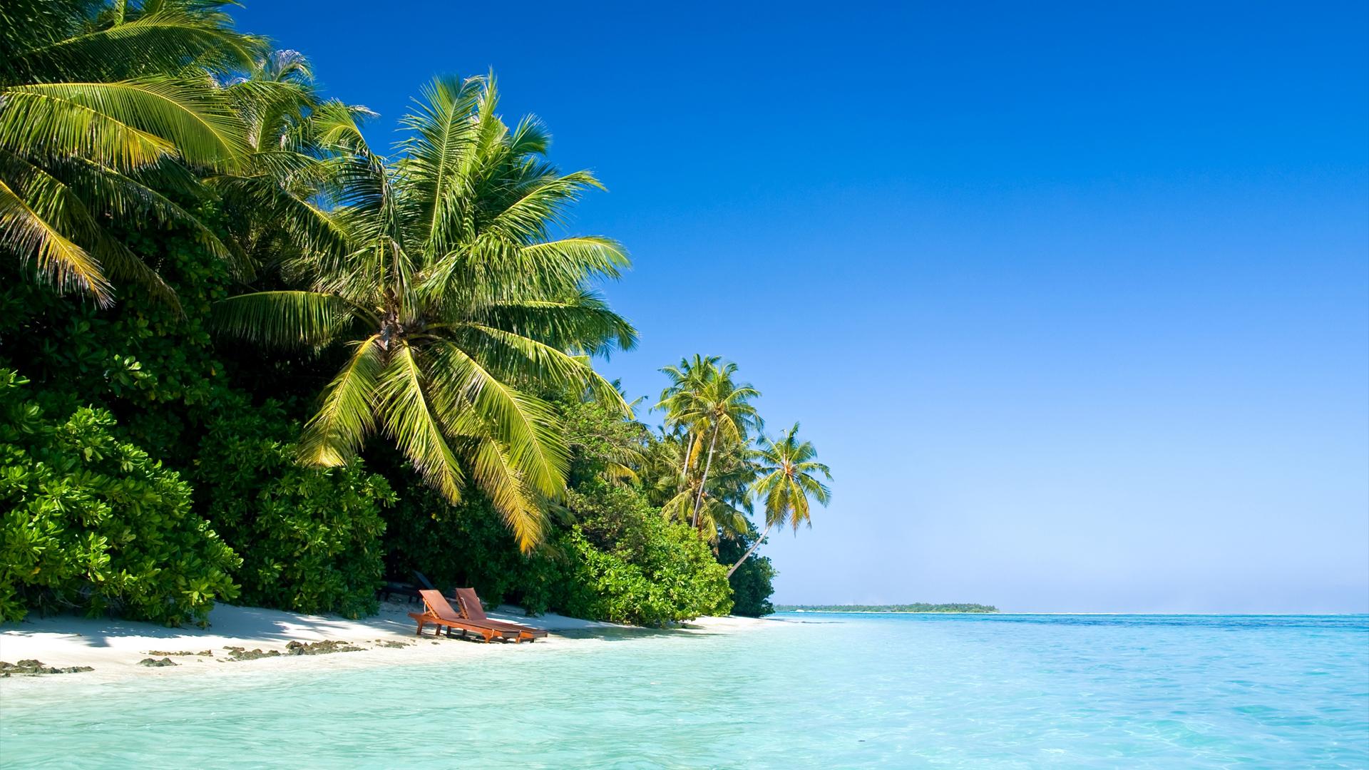 Hd Windows 10 Wallpaper Maldives Nature - Palm Tree Beach - HD Wallpaper