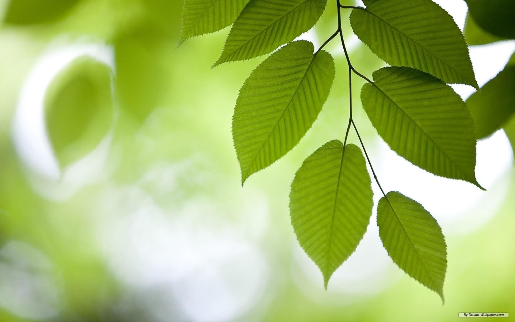 Free Nature Wallpaper - Windows 7 Green Leaf - HD Wallpaper
