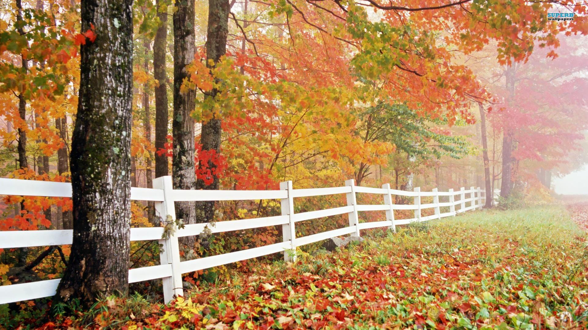 Nature Wallpaper Autumn Free 1 Desktop Wallpapers Hd Fall Backgrounds Windows 10 1920x1080 Wallpaper Teahub Io