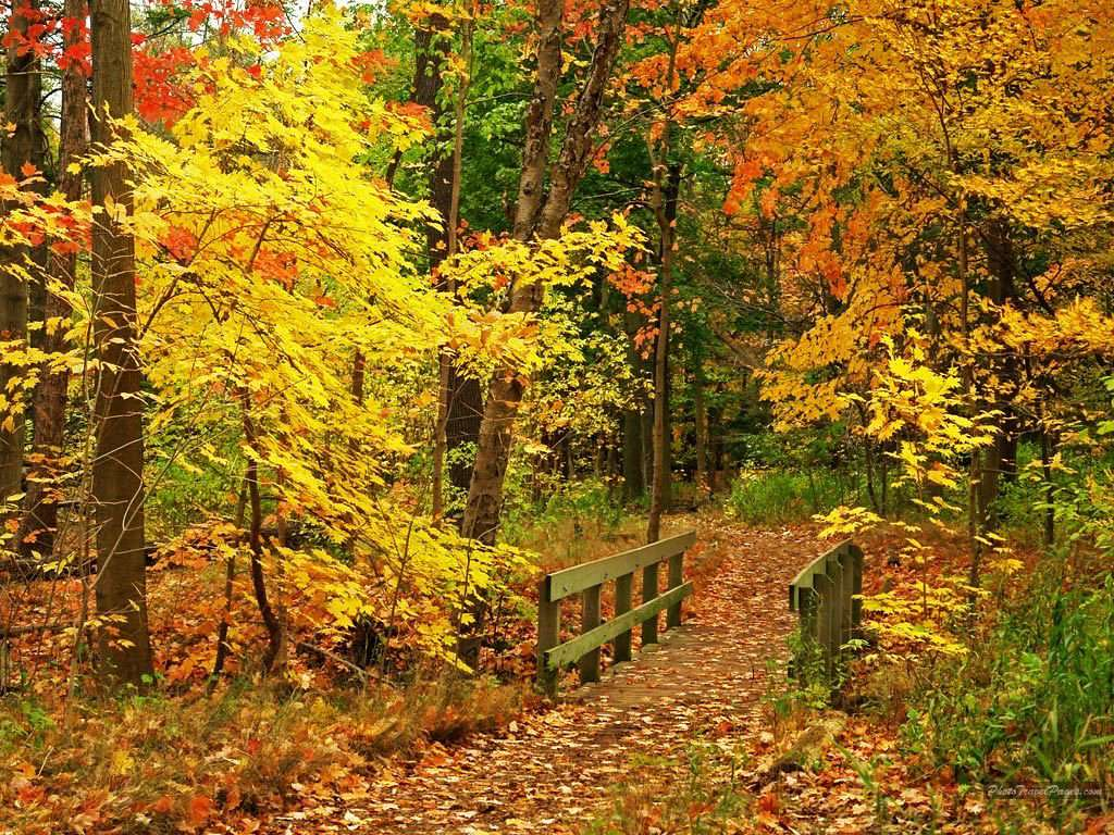Nature Wallpaper For Windows 10 Pc - Beautiful Fall - HD Wallpaper