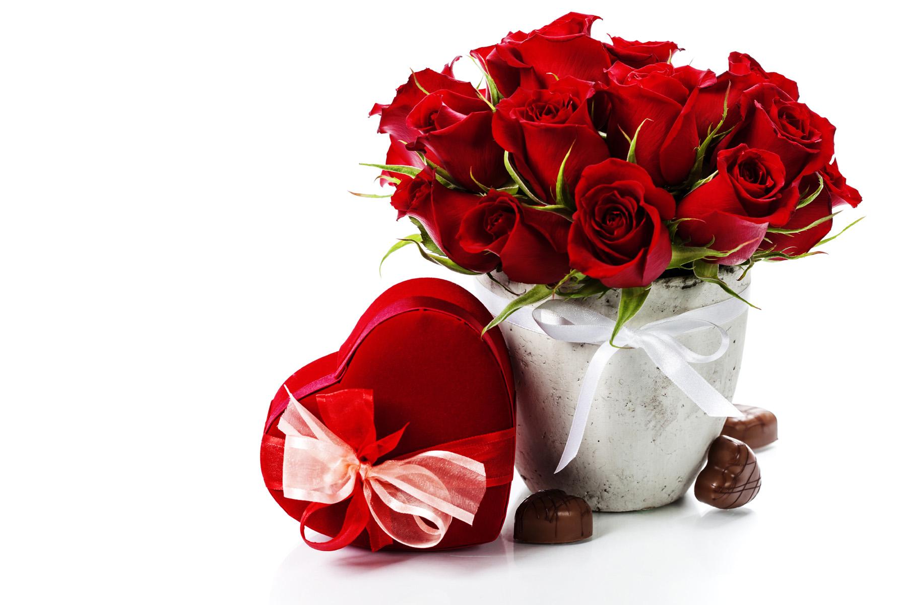 Red Rose Flower Pots Love Romantic Flower Gift 1800x1200 Wallpaper Teahub Io
