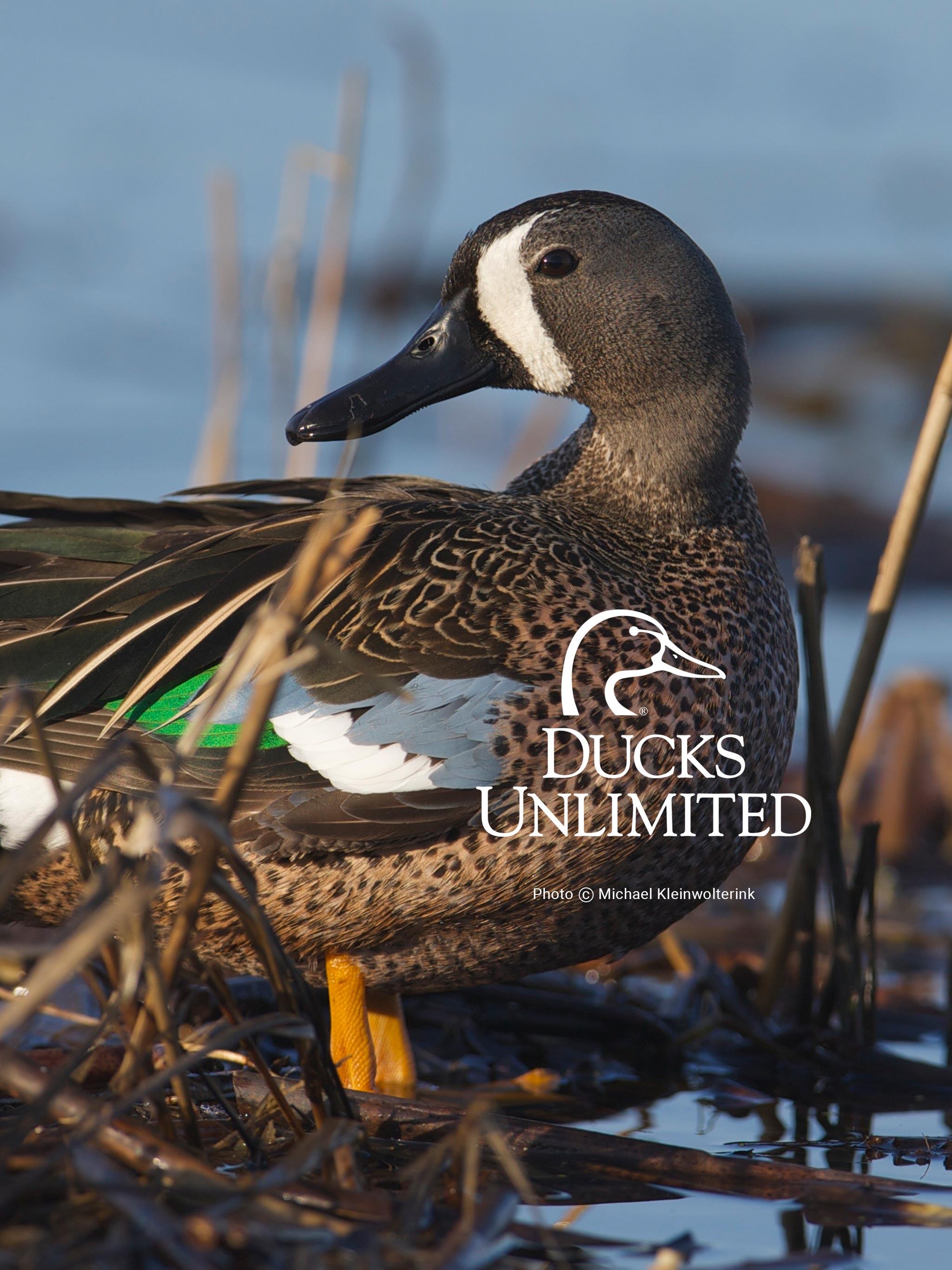 Goose Hunting Wallpaper - Duck Hunting Wallpaper For Iphone - HD Wallpaper
