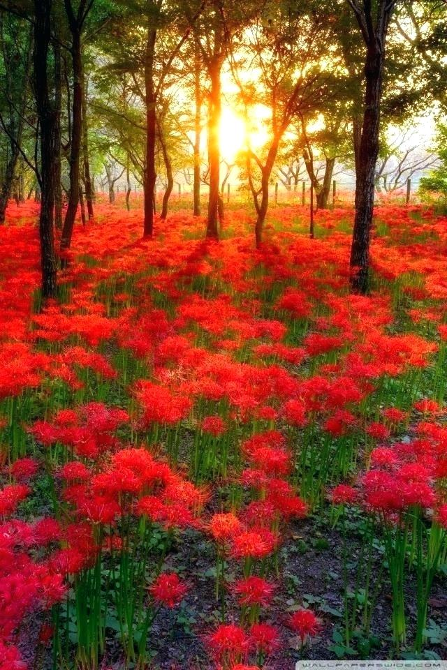 World Beautiful Nature Wallpaper Most In The Green - Beautiful Wallpaper In The World - HD Wallpaper