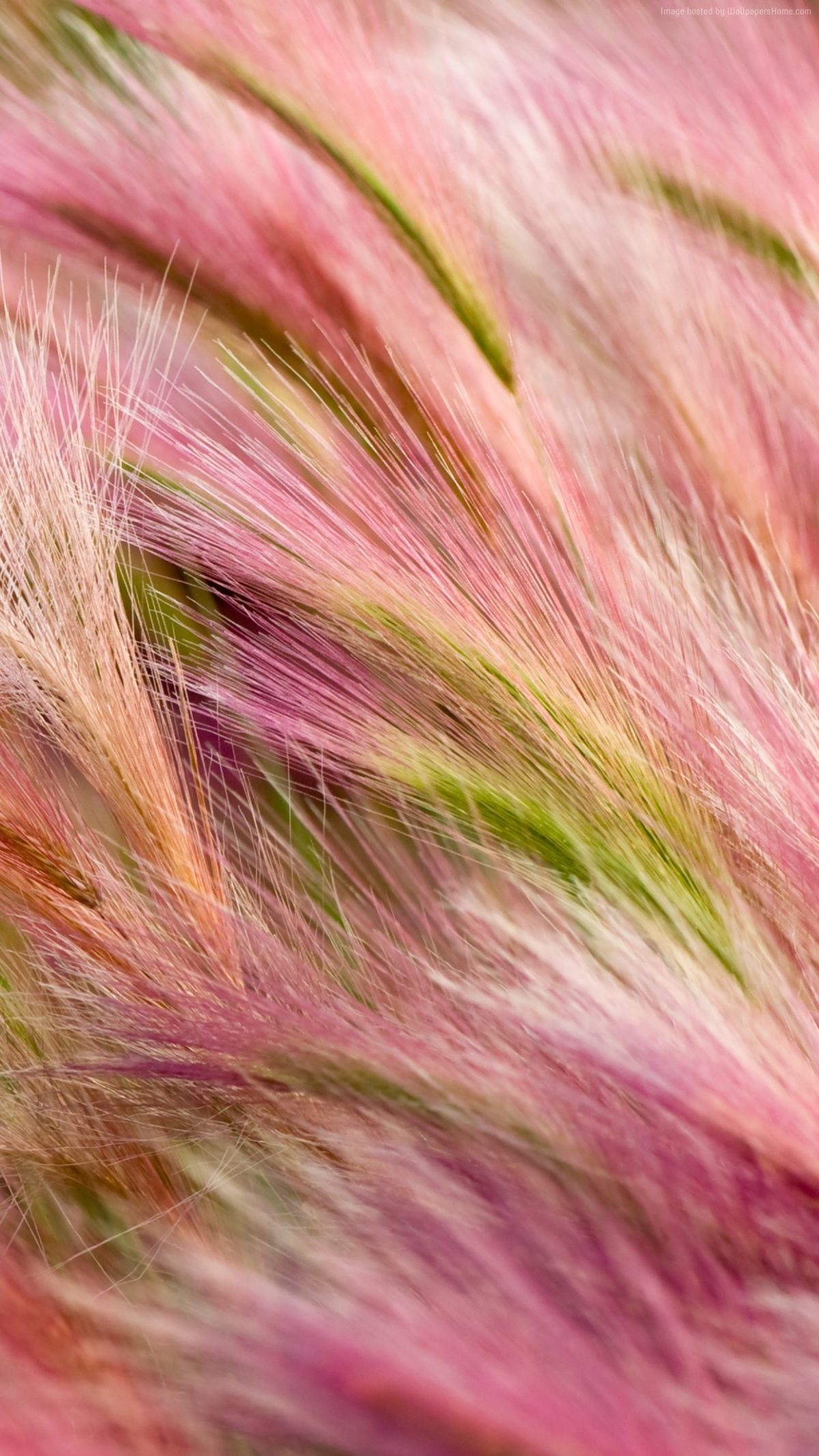 Red Pink Grass Abstract Apple Wallpaper Iphone Samsung Mobile Wallpaper New 1200x2133 Wallpaper Teahub Io