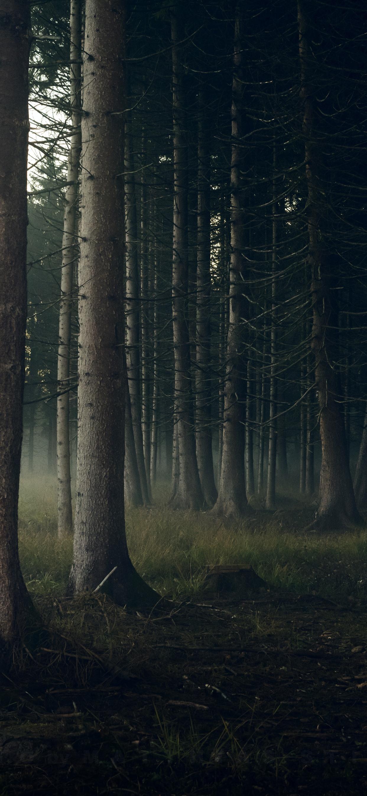 Iphone Wallpaper Forest, Trunks, Fog, Morning - Iphone Xs Max Wallpaper Forest - HD Wallpaper