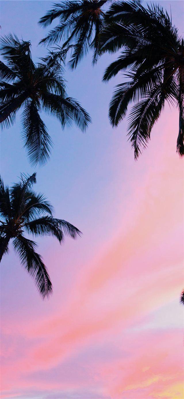 Iphone X Wallpaper Palm Trees - HD Wallpaper
