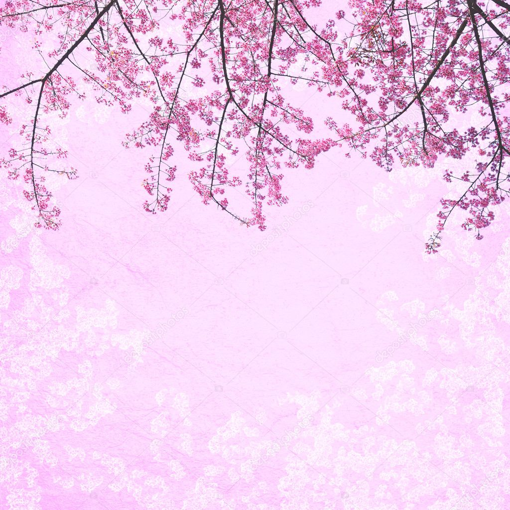background pink bunga sakura 1024x1024 wallpaper teahub io background pink bunga sakura 1024x1024 wallpaper teahub io