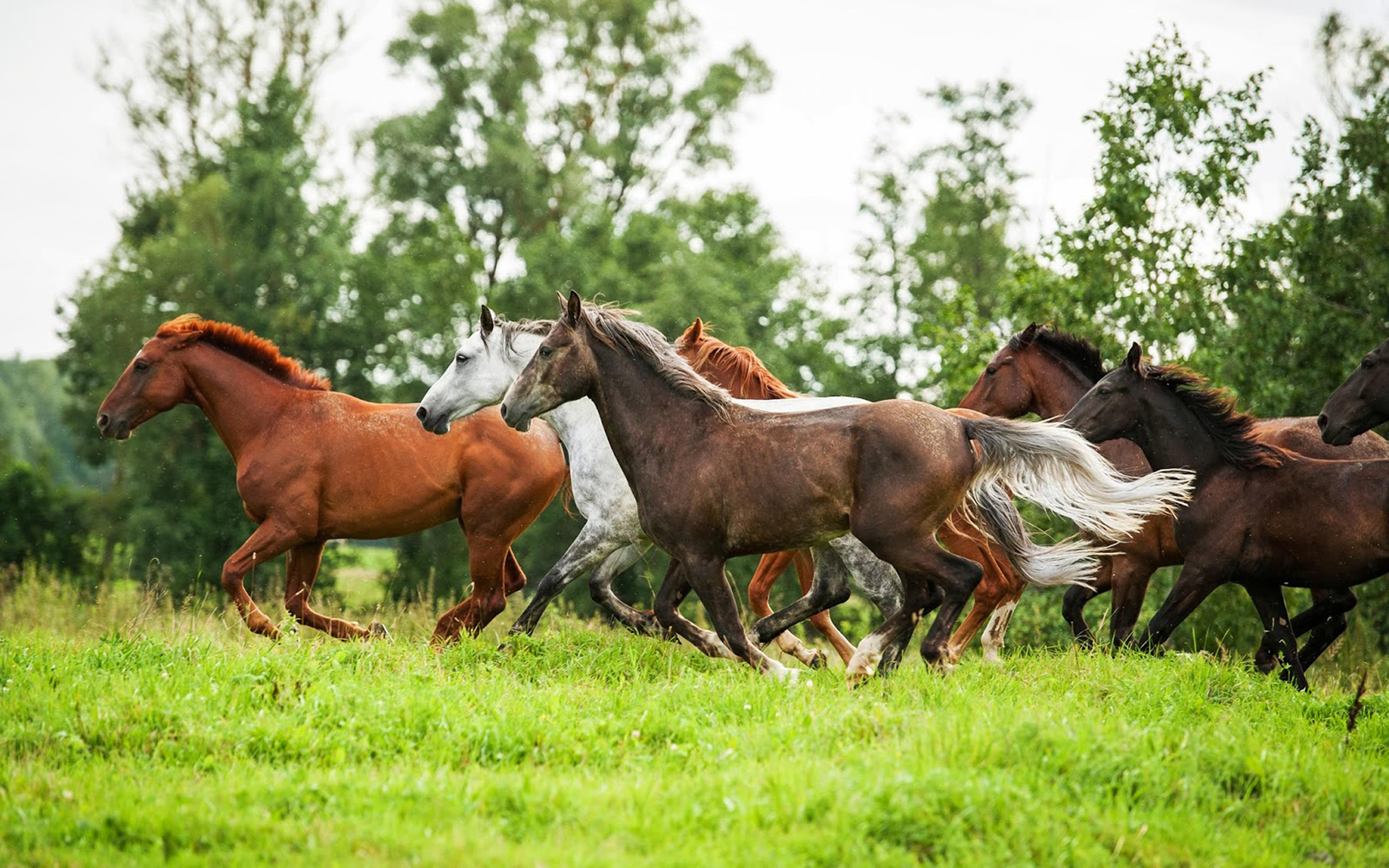 Beautiful Wild Horses Running 3840x2400 Wallpaper Teahub Io
