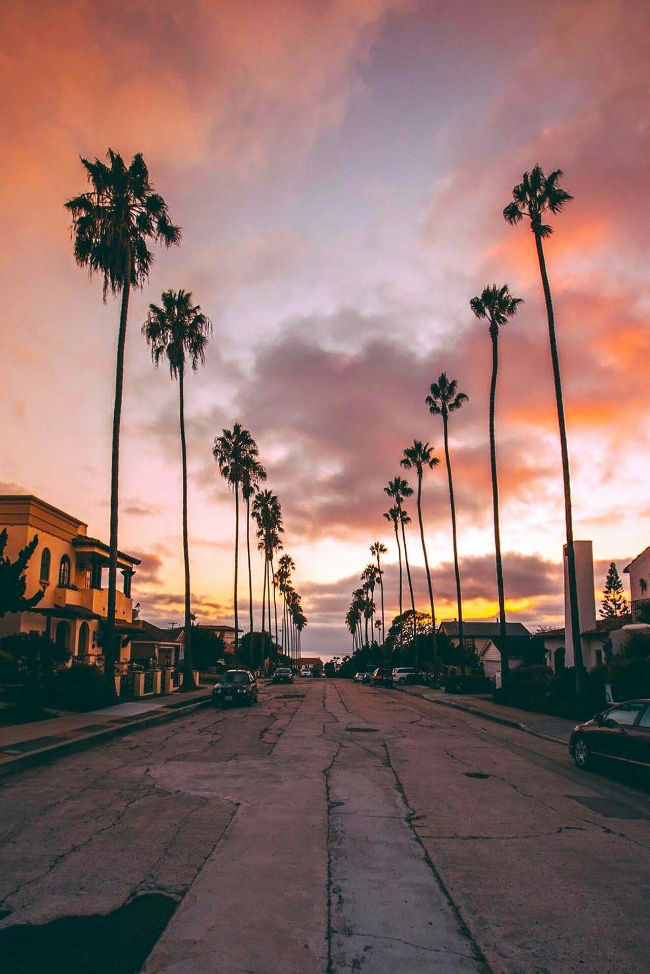 Sunset La Palm Trees Background - HD Wallpaper