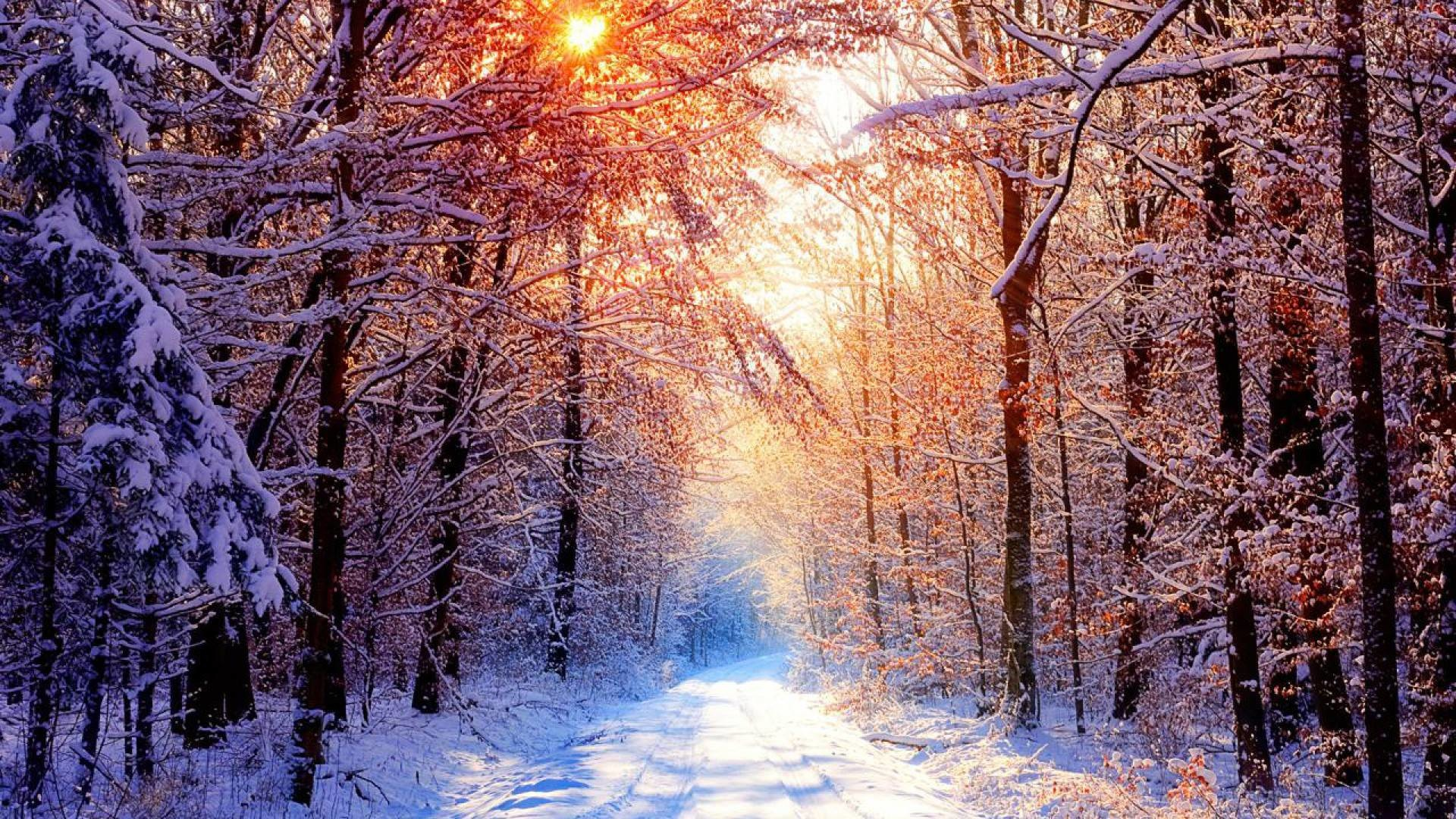 1920x1080, Like Or Share Creek Winter Forest Wallpapers - Snowy Forest Background - HD Wallpaper