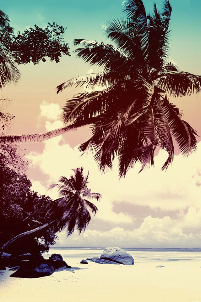 Palm Trees For Iphone - HD Wallpaper
