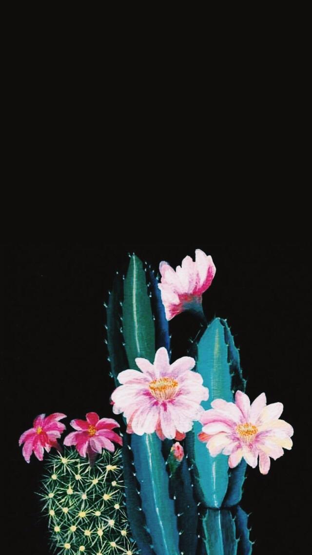 Cactus Iphone Wallpaper Black 640x1136 Wallpaper Teahub Io