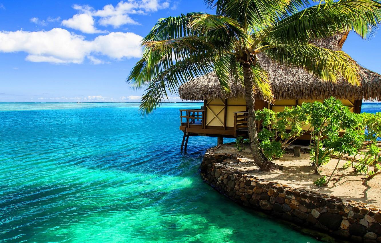 Photo Wallpaper Tropics, Palma, The Ocean, Exotic, - Nature Landscape Oil Painting On Canvas - HD Wallpaper