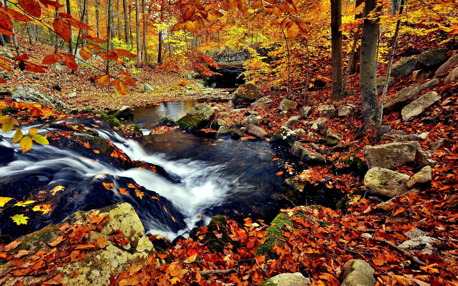 Fall Desktop Wallpapers Free Photo Forest Wallpaper Autumn 1920x1200 Wallpaper Teahub Io