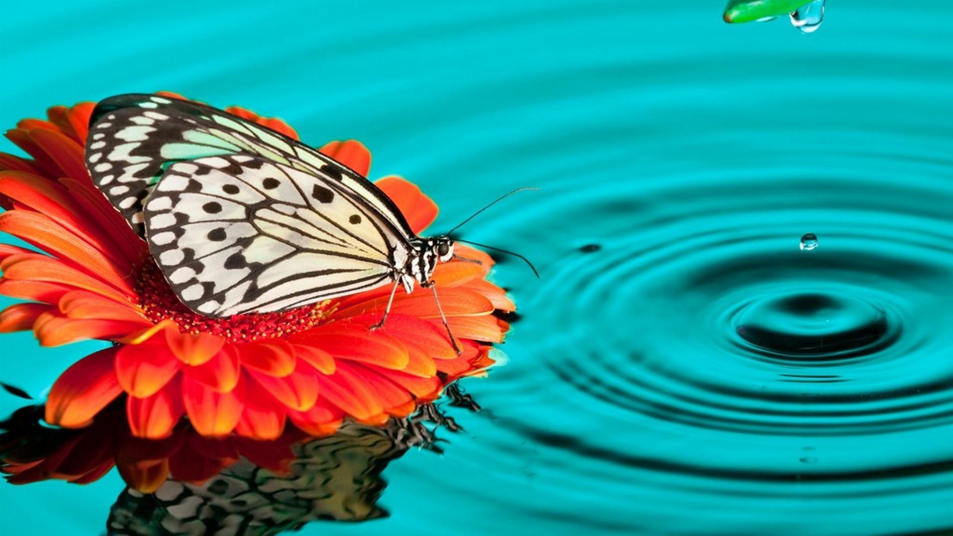 Girls Butterfly Desktop Backgrounds Hd - Butterfly With Water Hd - HD Wallpaper