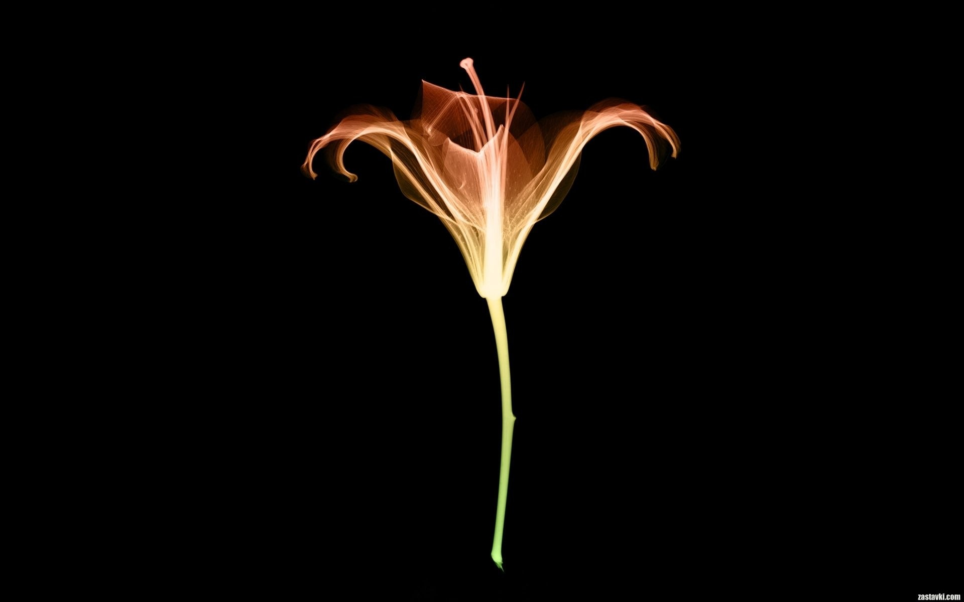 1920x1200, X Ray Wallpaper Wallpapers For Free Download - X Ray Flowers - HD Wallpaper