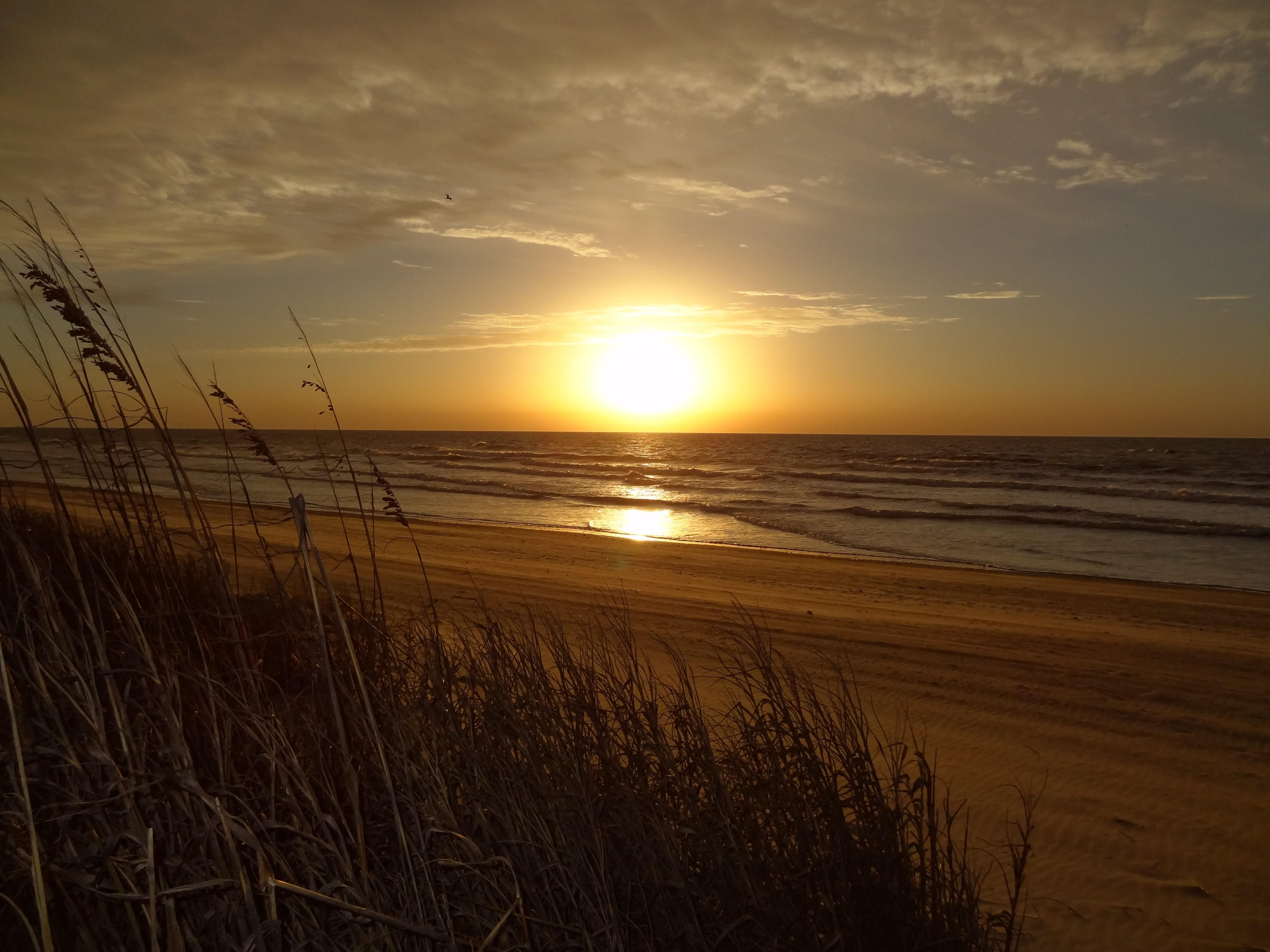 North Myrtle Beach Wallpaper - Grass On Beach Sunset - HD Wallpaper