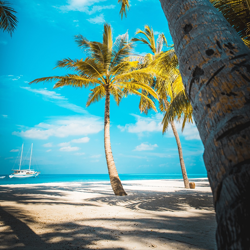 Iphone Palm Tree Beach Background - HD Wallpaper
