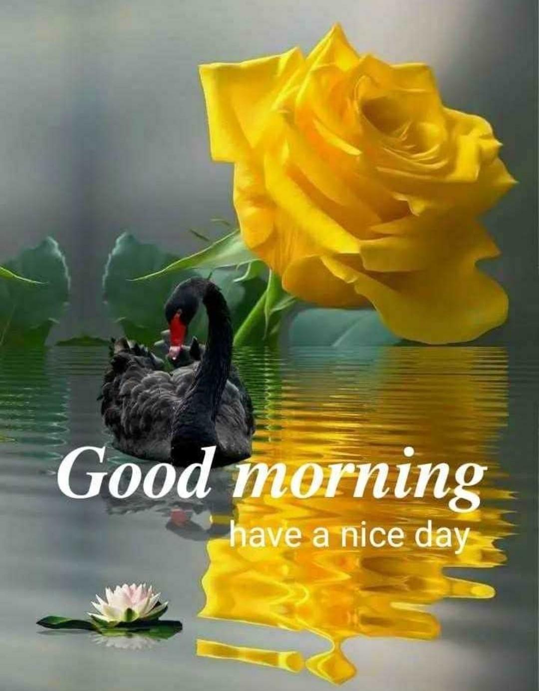 New 631 Good Morning Image - Good Morning Black Rose Hd - HD Wallpaper