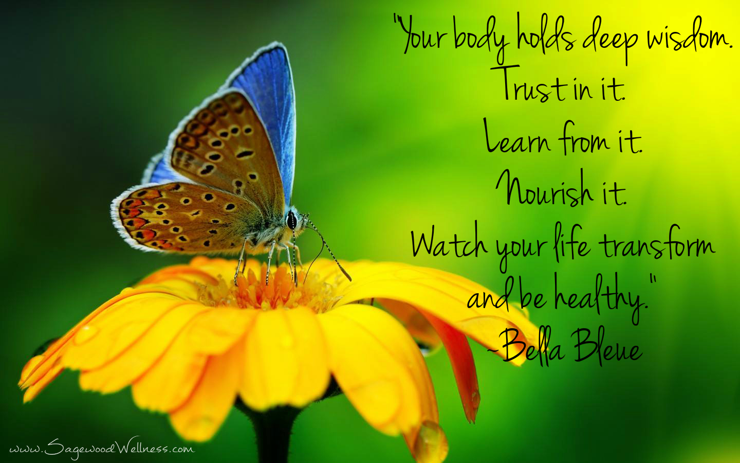 Hd Inspirational Health And Wellness Quotes On Top - Nature Flowers And Butterflies - HD Wallpaper