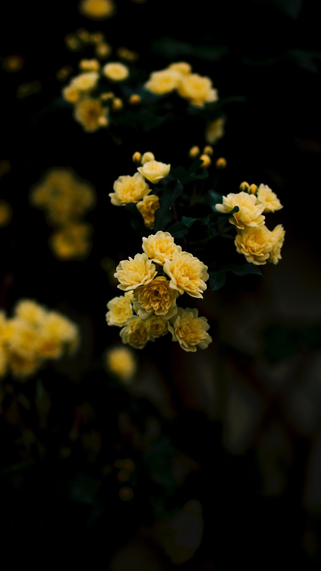 Yellow Rose Iphone Wallpaper Yellow Aesthetic Wallpaper Rose 1080x1920 Wallpaper Teahub Io