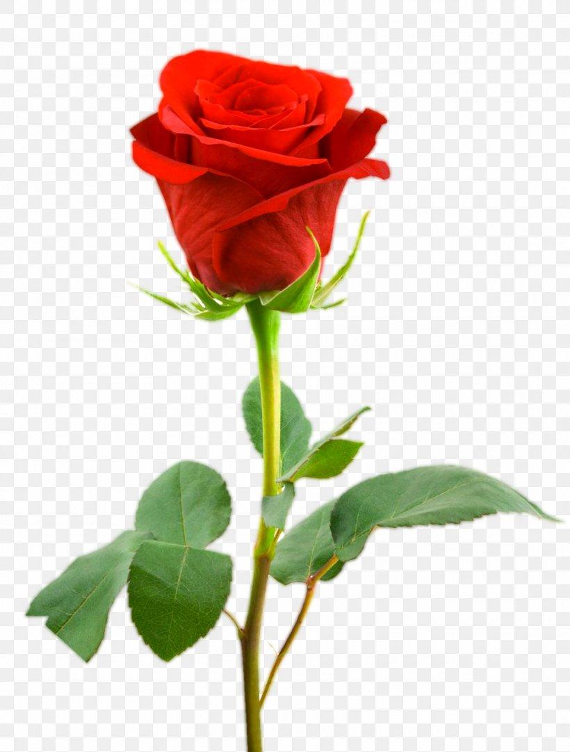 Desktop Wallpaper Rose Flower Drawing, Png, 1000x1319px, - Single Rose Flower Png - HD Wallpaper