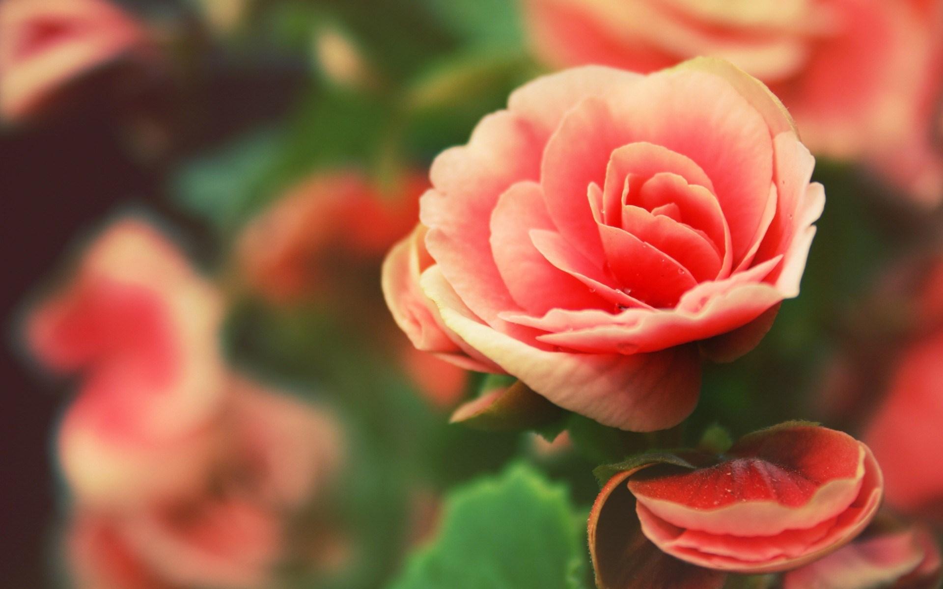 Beautiful Flowers Wallpaper Nature - HD Wallpaper