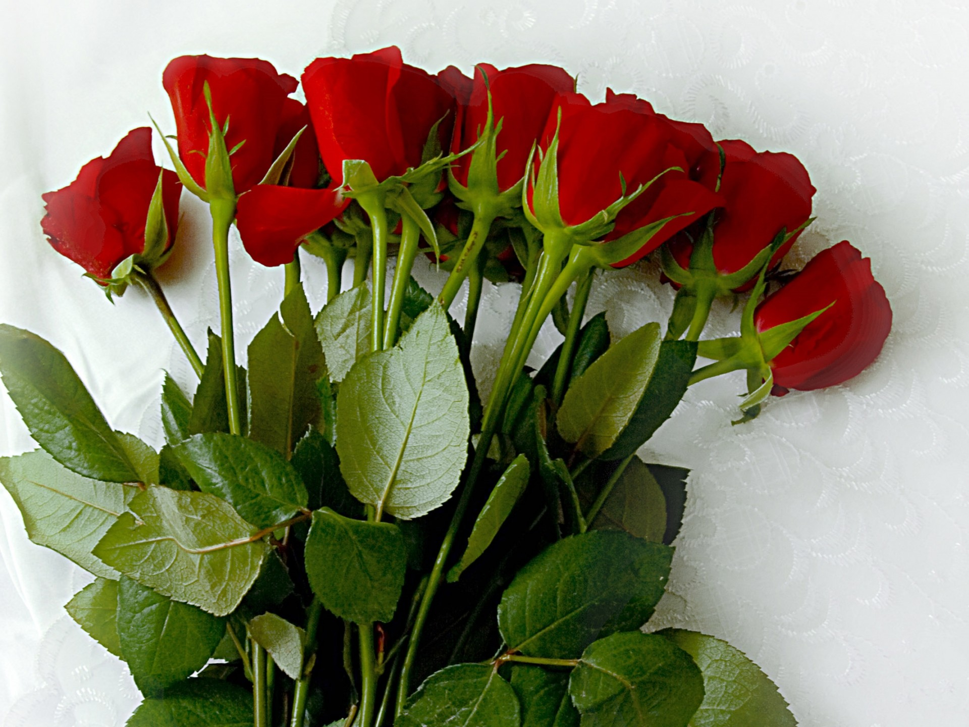 Very Beautiful Good Morning Images Hd With Rose - HD Wallpaper