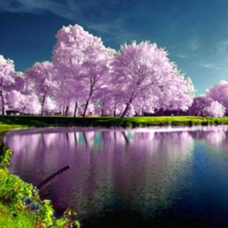 Spring Nature Desktop Wallpaper - High Resolution Nature Desktop Backgrounds - HD Wallpaper