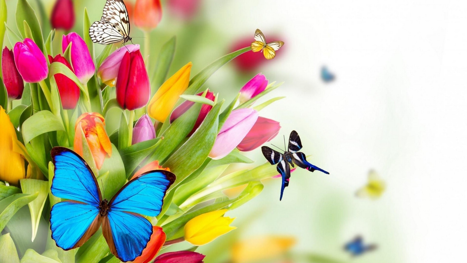 Springtime Desktop Wallpaper - Full Hd Beautiful Flowers - HD Wallpaper