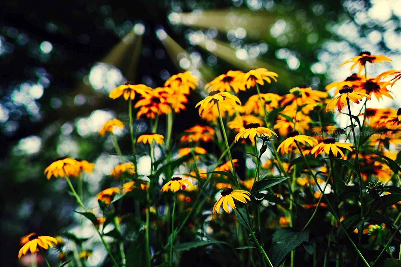 Flowers Wallpaper Photo Print, Sun Rays, Professional - Professional Pictures Of Nature - HD Wallpaper