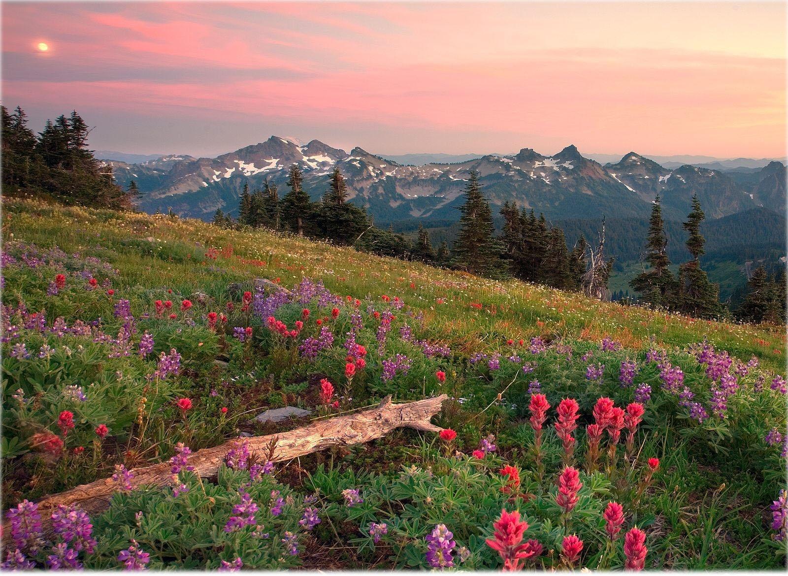 Natural Scenery Desktop Wallpaper - Mount Rainier - HD Wallpaper